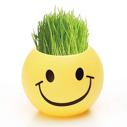 OSAYES Flower Seed Plant Man-Like Cute DIY Emotion Grass Pot Decor Fashion Mini Bonsai for Living Home Garden Greenhouse Indoor Include Seed,Nutrient Soil,Pot Cup