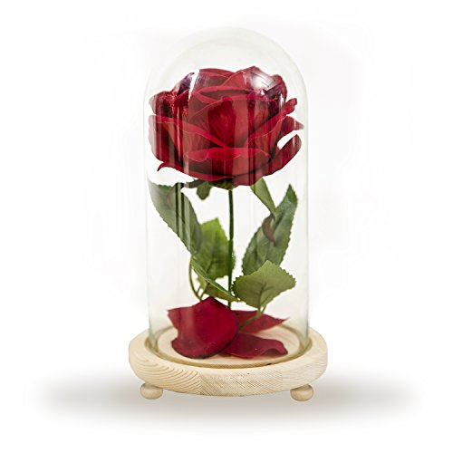 Jiabng Red Velvet Rose Colorful Night Light in Glass Dome - Romantic Gift for Her | Movie Theme Party Wedding Decoration