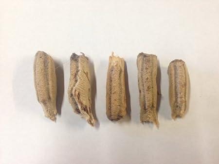 Amazon Com Carolina Praying Mantis Egg Case 5 Praying Mantids