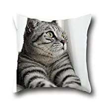 Robert Beautiful Black Cat Funny Painting Gift Anniversary Throw Pillow Cases Case Premium Zippered Cotton Terry Covers Pillow Cover ( 18*18 )