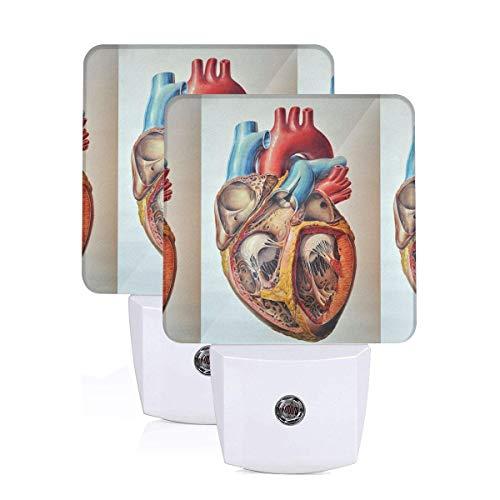 Cardiac Model LED Sleep Night Light Nightlight Auto Sensor (2 Pack)