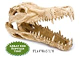 Pen Plax RR1065 Crocodile Skull Animal Resin Ornament for Fish Tanks