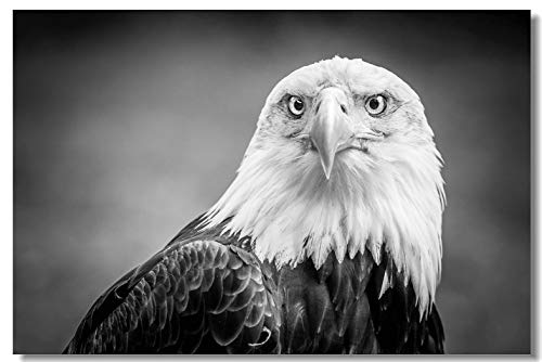 (Poster Black and White American Bald Eagle Animal Photo Fabric Prints for Room Wall 35.5x23.5inch (90x60cm) (001) )