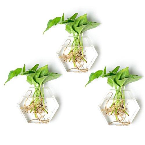 Mini Ornament Glass Blown (NewDreamWorld's Blown Ornament Set of 3 Clear Glass Geometric Terrariums Hexagon Glass Wall Vase for House Plants Wall Mounted Planter Decorative Indoor Mini Fairy Gardening)