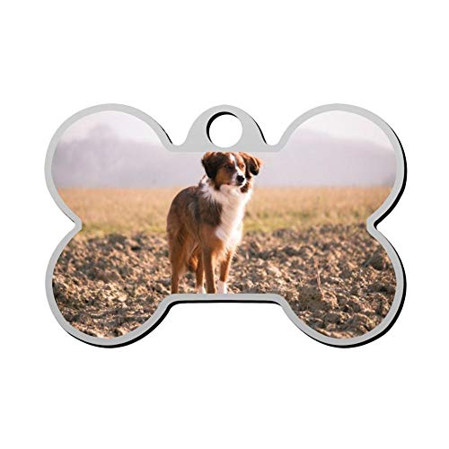 KIHNNnbjrnl Portrait of Dog Standing in Field Customize Pet Id Bone Tags Personalized Dog Tags Cat Tags - Standing Portrait