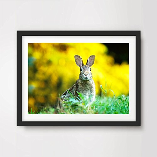 ANIMAL ART PRINT POSTER BUNNY RABBIT Wildlife Photography Home Decor Interior Design Wall Picture Photo A4 A3 A2 (10 Size Options)