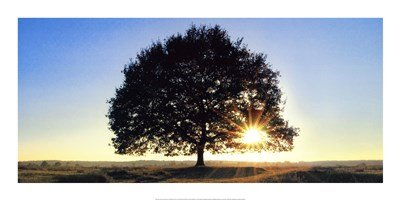 - Lonely Tree in De Hoge Veluwe, The Netherlands by Jan Lens - 39.25x19.5 Inches - Art Print Poster