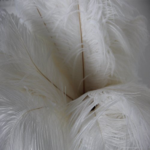 Kayso 100pcs New Style Real Natural 12-14 Inch(30~35cm) Ostrich Feathers Great Decorations (12 Ostrich)