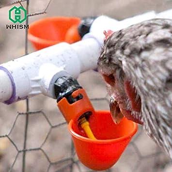 ✔ ✔ ✔ 10 pieces Quail chicken water supply feeder ✔ ✔ ✔