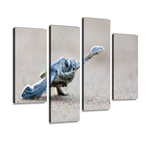 Canvas Wall Art Painting Pictures Hatchling Green Sea Turtle scurrying Across Beach Towards The sea National Park Modern Artwork Framed Posters for Living Room Ready to Hang Home Decor 4PANEL