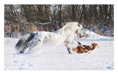 Lunarable Horses Doormat, Appaloosa Pony and Sable Border Collie Runs Gallop in Winter Photo Print, Decorative Polyester Floor Mat with Non-Skid Backing, 30