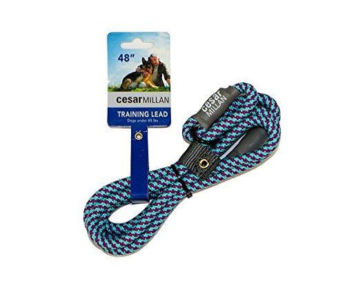 Aqua Leash - Cesar Millan Slip Lead Leash | Dog Leash | in Training Leash | (Regular, Aqua/Purple)