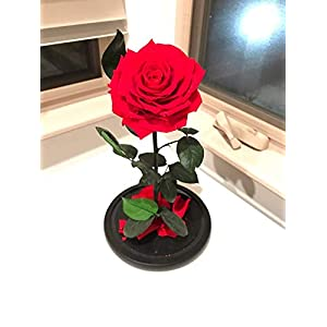 Premium Eternal Roses Preserved Rose Enchanted Rose Forever Rose Enchanted Rose Eternal Rose Flowers for Delivery Beauty and The Beast Rose Rose Delivery 110