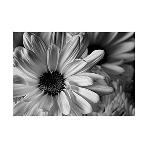 Black and white flower pictures amazon photo black white flower petals framed print f12x2823 mightylinksfo