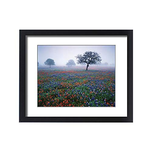 Media Storehouse Framed 20x16 Print of USA, Texas, Hill Country, View of Texas Paintbrush and Bluebonnets (11183730)