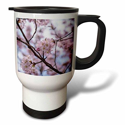 3dRose Alexis Photography - Flowers Sakura Beautiful - Detail of Japanese cherry blossom sakura tree in full bloom in spring - 14oz Stainless Steel Travel Mug (tm_286579_1) by 3dRose