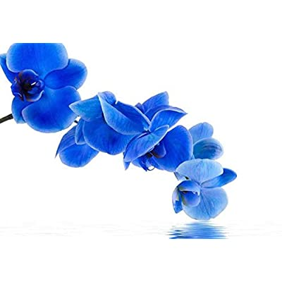 Blue Orchid Flowers Over a Lake II Wall Mural, That You Will Love, Magnificent Artistry