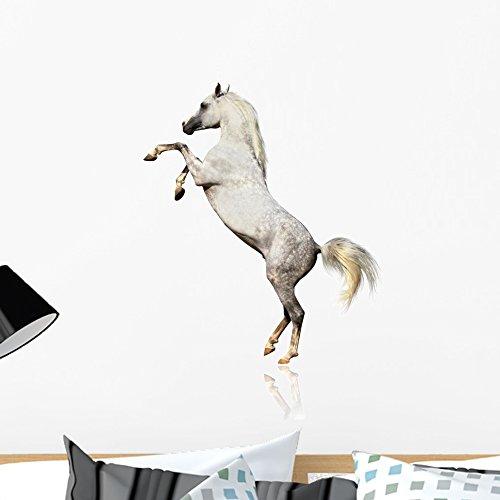 Wallmonkeys Arabian Horse Wall Decal Peel and Stick Graphic WM266067 (24 in H x 16 in W) by Wallmonkeys