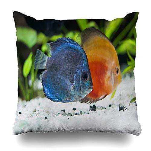 Ahawoso Throw Pillow Cover Reef Blue Aquarium Fish Swimming Nature Orange Small Black Closeup Clown Color Design Single Home Decor Pillow Case Square Size 18x18 Inches Zippered Pillowcase