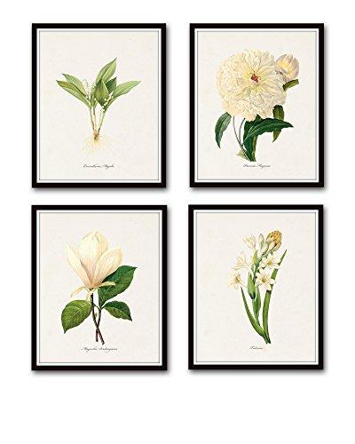 Fine White Antique Art Giclee (Redoute White Botanical Print Set No.1 Set of 4 Giclee Fine Art Prints - Unframed)