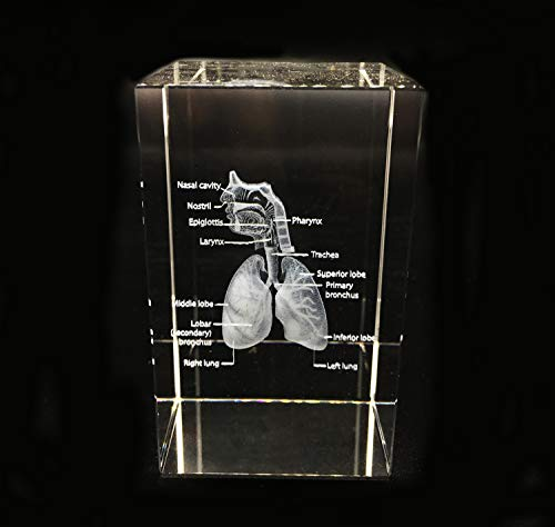 3D Human Respiratory System Anatomical Nasal Cavity Throat Anatomy Model Paperweight(Laser Etched) in Crystal Glass Cube Science Gift (No Included LED Base)(3.1x2x2 inch)