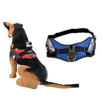 Cbk azul ajustable perro correa de pecho Cinturón Correa De Soporte Para Cámara GoPro Hero 2 3 + 4: Amazon.es: Electrónica