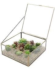 MyGift Vintage Brass & Clear Glass Decorative Box, 9.5-Inch Plant Terrarium Display, Jewelry Organizer with Lid