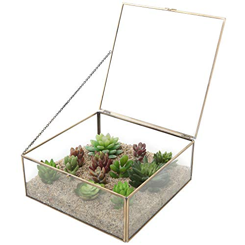 MyGift Vintage Brass & Clear Glass Decorative Box, 9.5-Inch Plant Terrarium Display, Jewelry Organizer with Lid (Box Glass Terrarium Card)