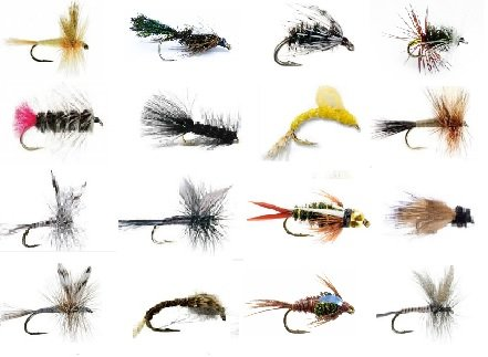 Caddis Bead Pupa (Feeder Creek Fly Fishing Lures Wet and Dry Assortment for Trout Fishing and Other Freshwater Fish - 16/32 / 48-16 Patterns of Adams, Mayflies, Attractors, Bead Head, Wooly Bugger and More (16))