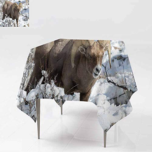 AFGG Custom Tablecloth,Bighorn Ram in The Snow - Colorado Rocky Mountain Bighorn She,for Square and Round Tables,36x36 Inch ep ()