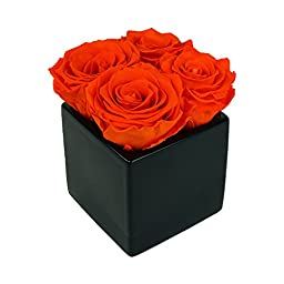 Luxe Bloom Home Collection 4 Fresh Cut Preserved Tangerine Orange Roses in 3\