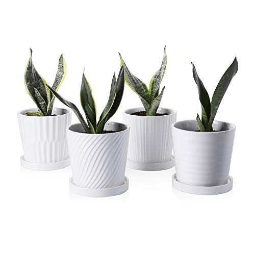 Greenaholics Plant Pots - 5.1 Inch Cylinder Ceramic Planters with Connected Saucer, Pots for Succuelnt and Little Snake Plants, Set of 4, White
