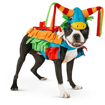 Pinata Costume For Dogs (Petco Halloween Donkey Pinata Dog Costume, X-Small)