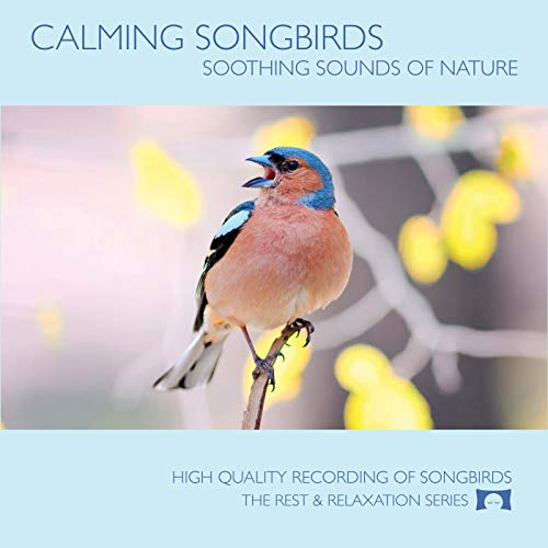 - Calming Songbirds - Nature Sounds Recording Of Bird Calls - For Meditation, Relaxation and Creating a Soothing Atmosphere - Nature's Perfect White Noise -