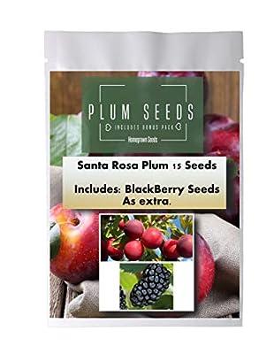 Homegrown Plum Seeds, 15 Seeds, Santa Rosa Plum, Inlcudes Free BlackBerry Seeds