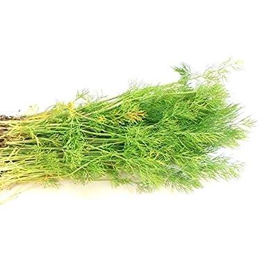 2500 Seeds Dill Bouquet Herb (1/8 oz) : Garden & Outdoor