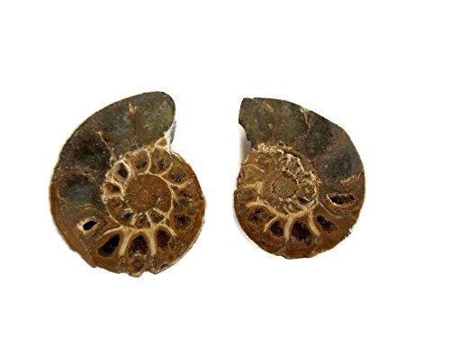 GemsDiamondsbySHIKHA 1 Piece Brown Ammonite Cabochon, Ammonite Fossil Focal Pendant 30mm Approx