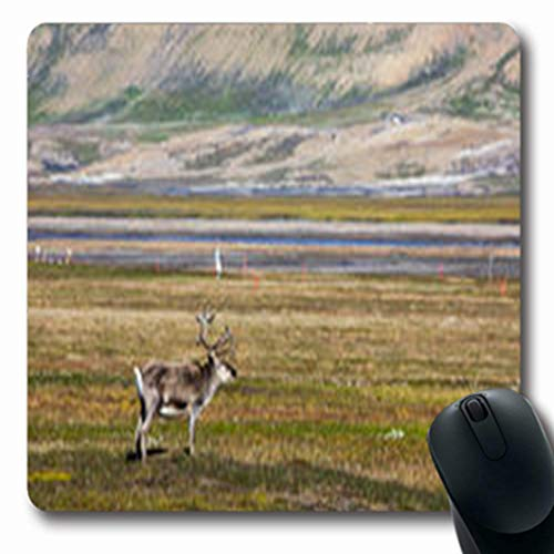 (Pandarllin Mousepads Saver Svalbard Reindeer Standing On Tundra Summer Wildlife Nature Screen Oblong Shape 7.9 x 9.5 Inches Oblong Gaming Mouse Pad Non-Slip Rubber Mat)