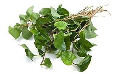 HOUTTUYNIA CORDATA Live Plant Non-GMO Organic Healthy Strong Root High Quality Live Plant Fish Mint Diep Ca Dap Ca