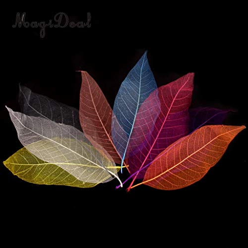 Best Quality - Artificial & Dried Flowers - 50Pcs Natural Magnolia Skeleton Leaf Leaves Card Scrapbooking DIY Mixed Color Used to Decorate Cards Candles Packages - by SeedWorld - 1 PCs