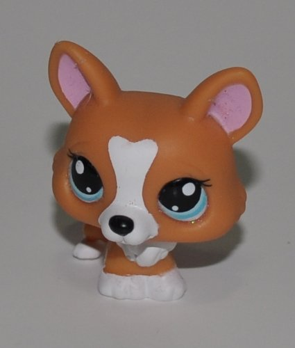 Corgi Toy Collectors (Corgi #1360 (Orange, Blue Eyes) - Littlest Pet Shop (Retired) Collector Toy - LPS Collectible Replacement Figure - Loose (OOP Out of Package & Print))