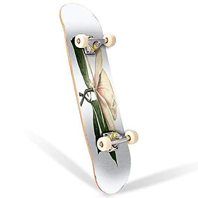 31 inch Skateboard chinese magnolia | redoute flower illustrations victorian botanical Complete Longboard Standard Skate board Double Kick Tricks Skateboards for Kids Boys Girls Youths Beginners : Sports & Outdoors