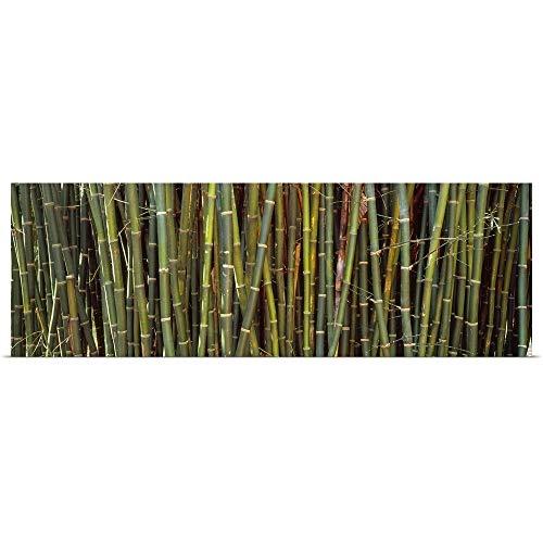 GREATBIGCANVAS Poster Print Entitled Bamboos in a Garden Kanapaha Botanical Gardens Gainesville Florida by 48