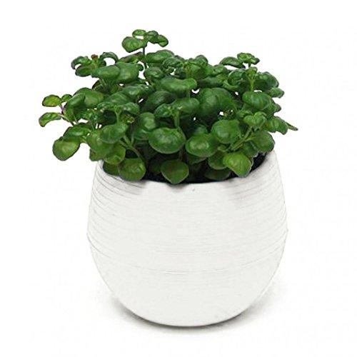 Shuohu Decorative Flower Pots Gloss Plastic Plant Planter Saucer Tray Home Garden Decor (White)