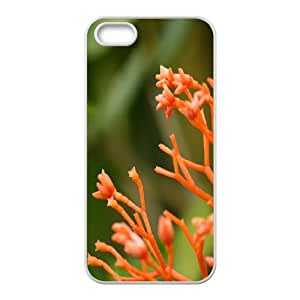 Evekiss Branch IPhone 5,5S Cases Palm Pre Branches for Guys Design, Cell Phone Case for Iphone 5s, [White]