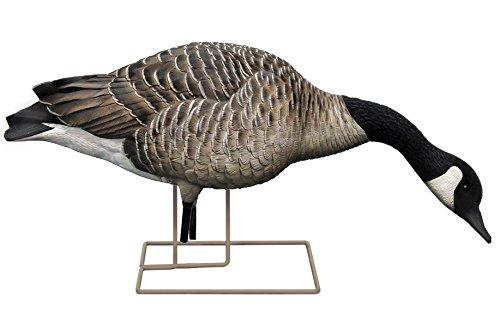 Avian-X Honker Feeder Full Body Goose Decoys 6 pack