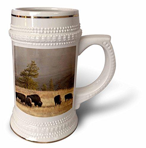 3dRose Danita Delimont - Bison - Herd of Bison in Upper Geyser Basin, Yellowstone NP, Wyoming - 22oz Stein Mug ()