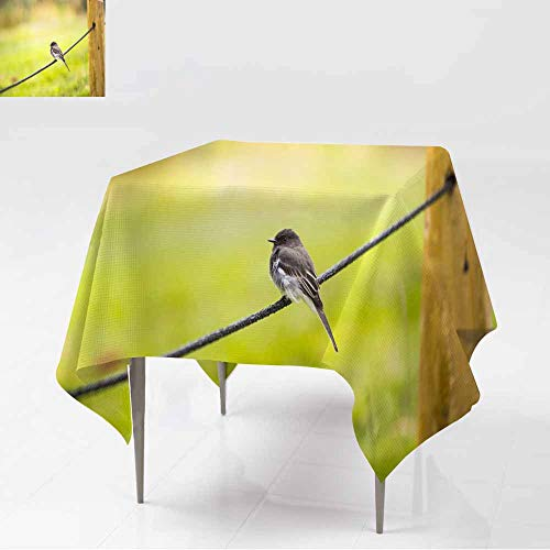 AFGG Spillproof Tablecloth,Black Phoebe (Sayornis nigricans) 2,Stain Resistant, Washable,54x54 ()