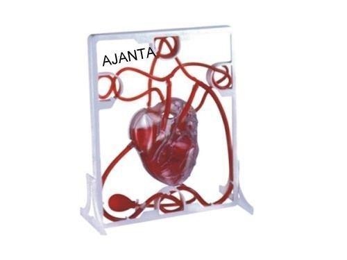 Pumping Heart Model anatomical models Medical Supplies