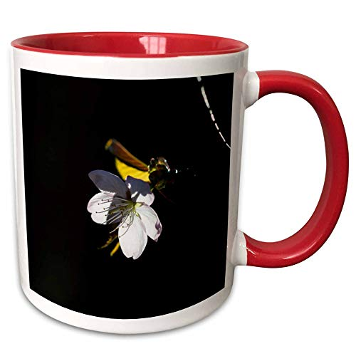 3dRose Alexis Photography - Flowers Sakura Blossoms - Sunlit sakura cherry blossom flower against the dark background - 15oz Two-Tone Red Mug (mug_290529_10) ()